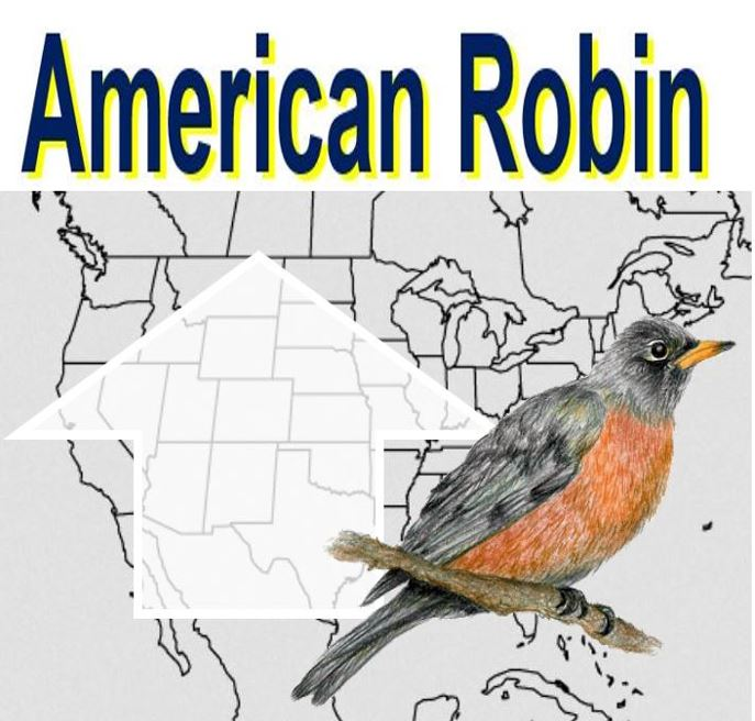 American Robin bird population change