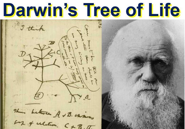 Charles Darwin made first Tree of Life