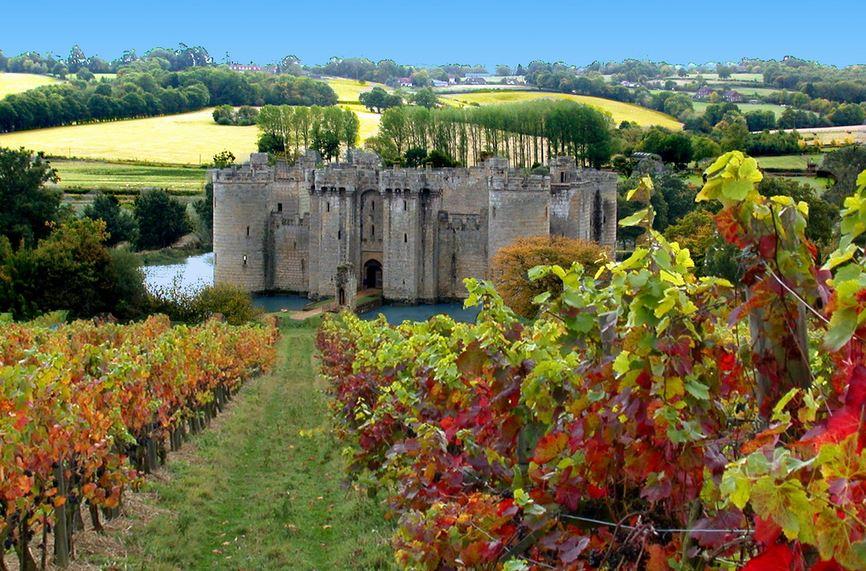 English Organic wine