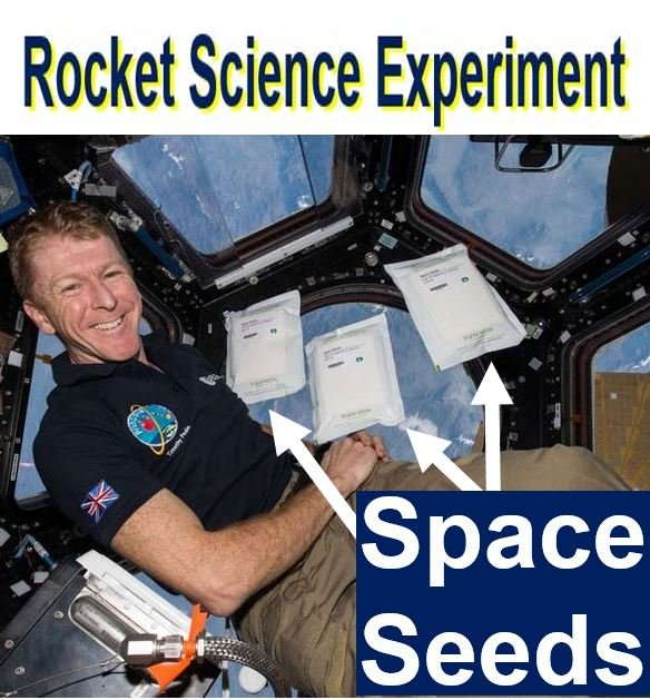 Space Seeds Rocket Science Experiment