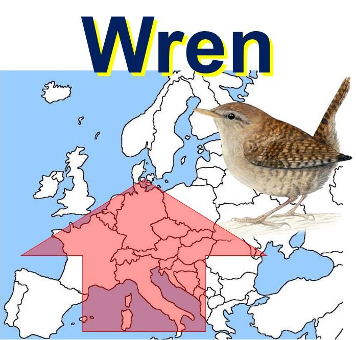 Wren bird populations Europe
