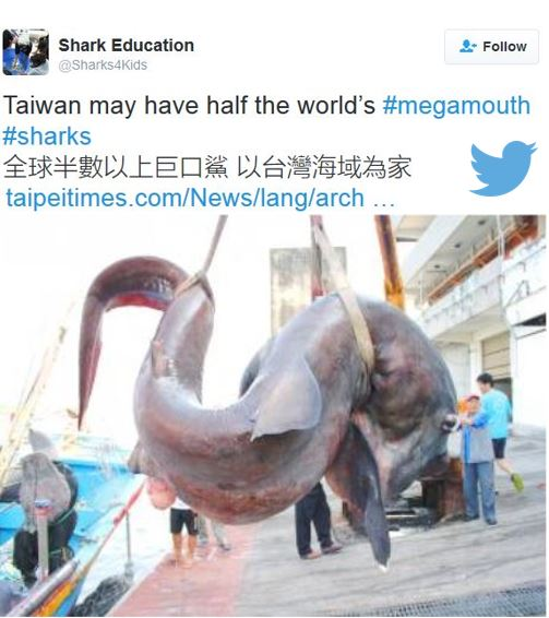 megamouth shark off coast of Taiwan