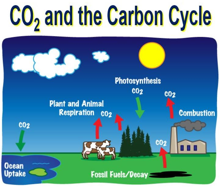 CO2 and the carbon cycle