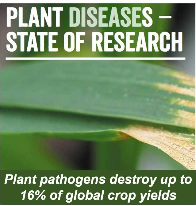 Plant diseases state of species