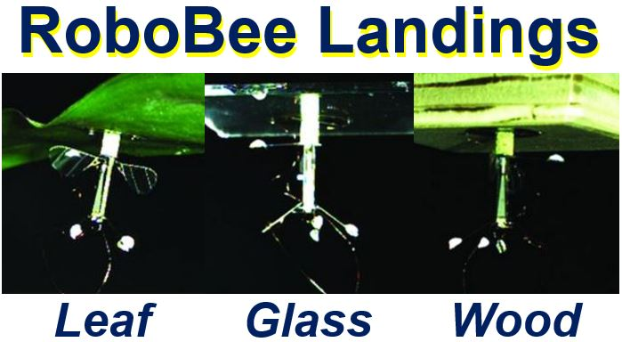 RoboBee landing on different surfaces