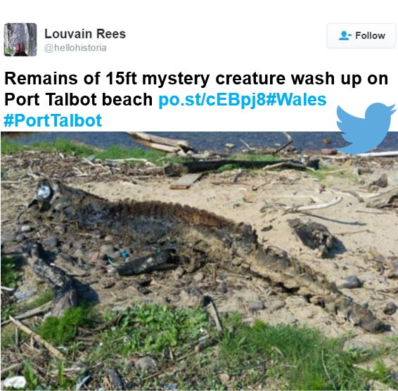 Scary beach monster found at Port Talbot
