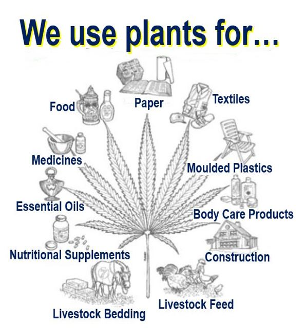 What do we use plants for
