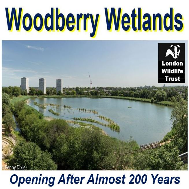 Woodberry Wetland pic