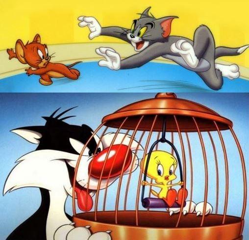 Cat and mouse and bird cartoons