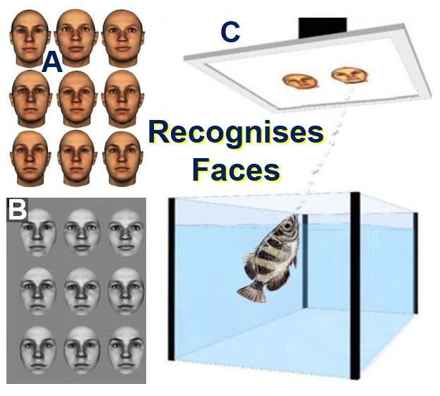 Fish recognise faces