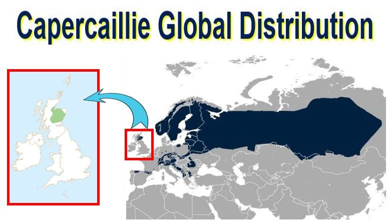 Capercaillie global distribution
