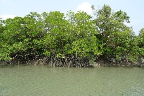 mangrove forests Sundarbans sarangib pixabay-1225627