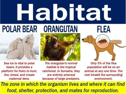 Habitat - definition and some examples