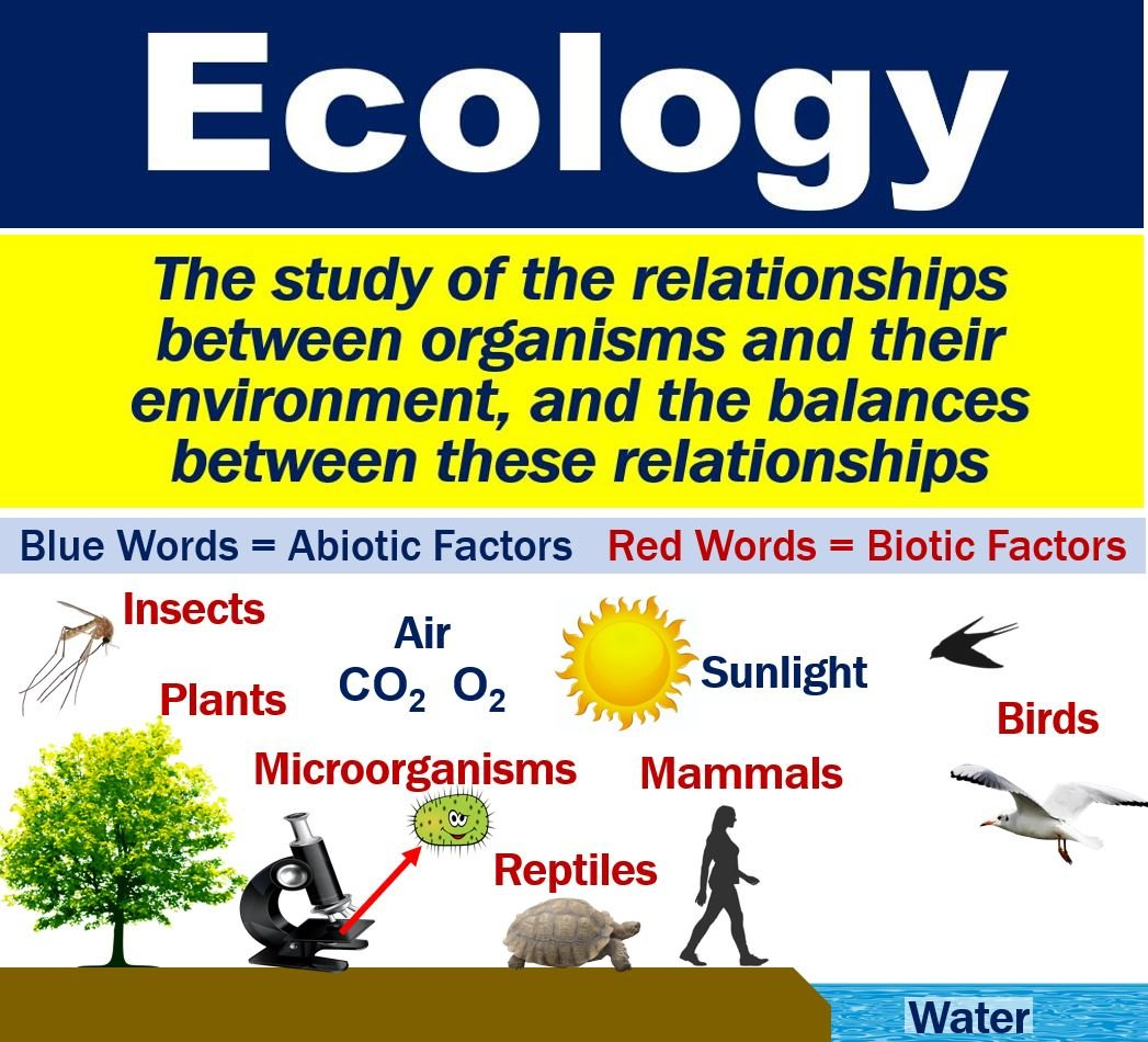 What Is Ecology  Definition And Examples