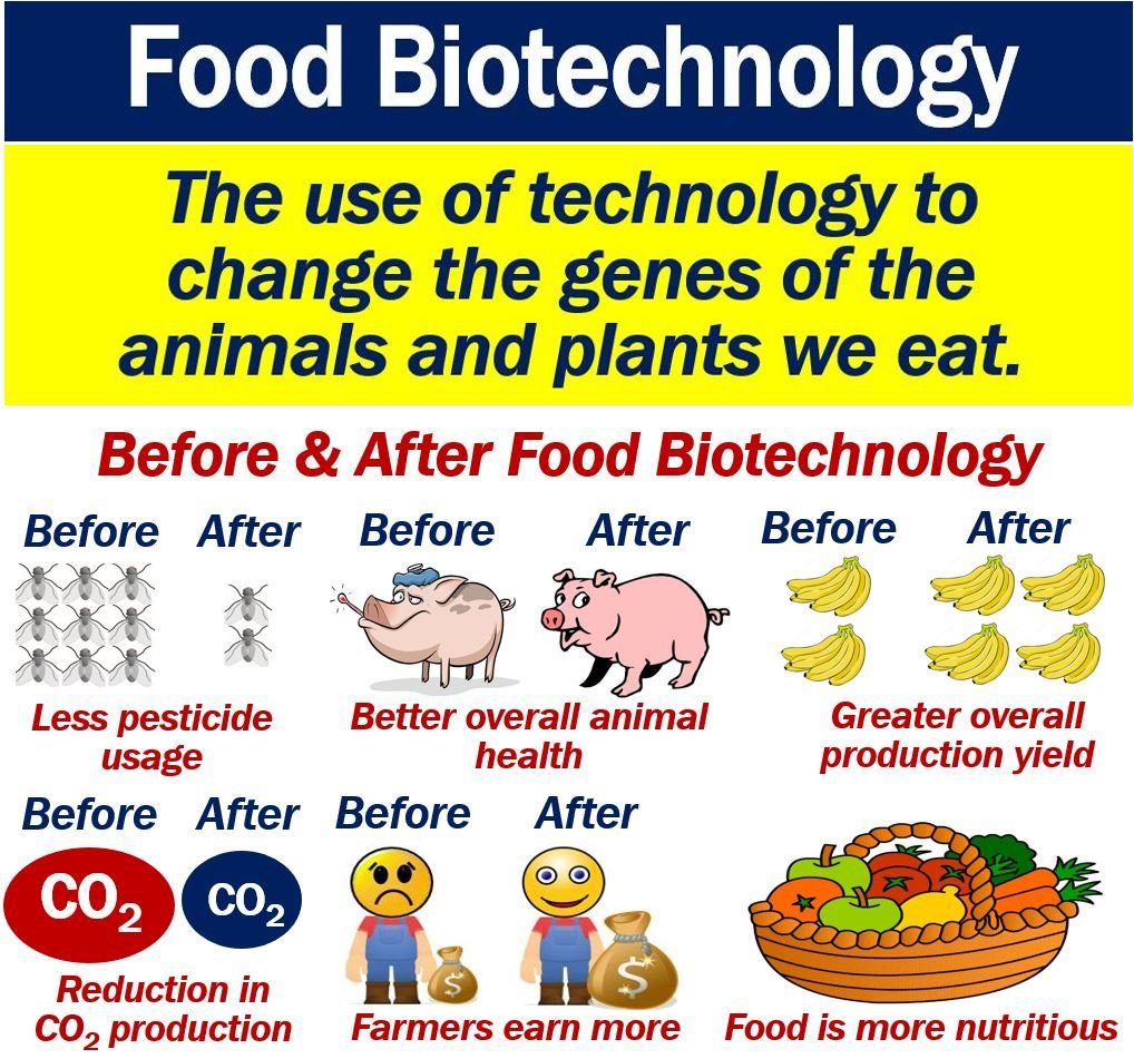 importance of food technology