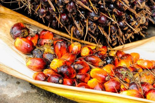 palm oil fruit pixabay-1464662