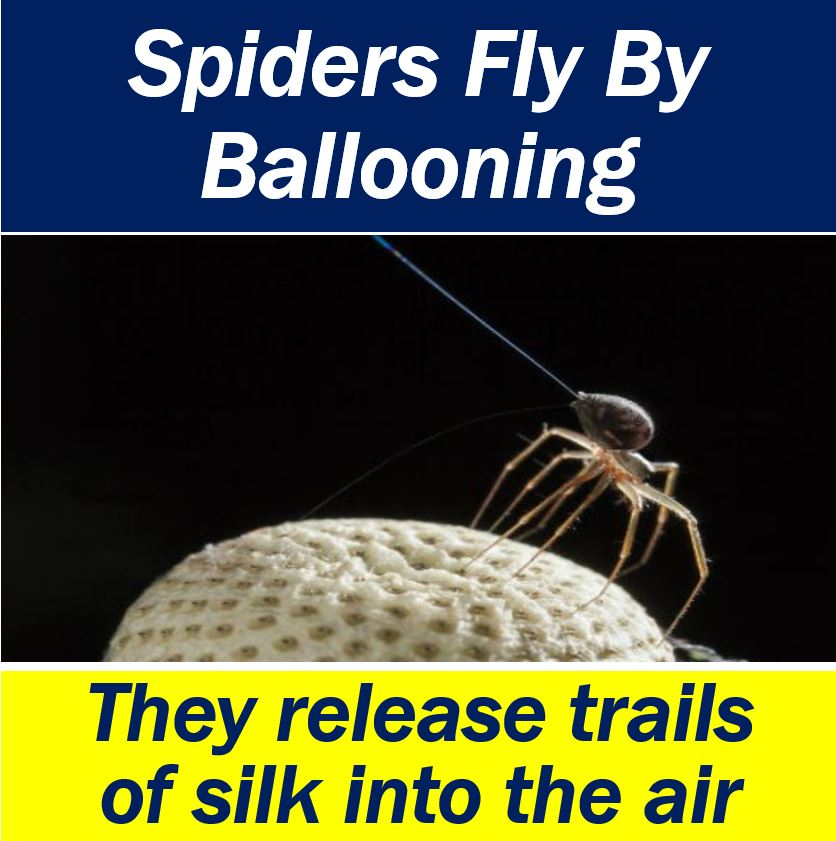 Spiders fly by ballooning