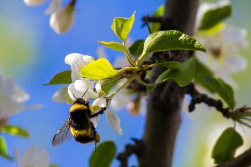 pesticide - bumblebee on flower