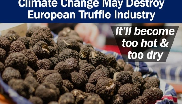 European Truffle Industry and climate change