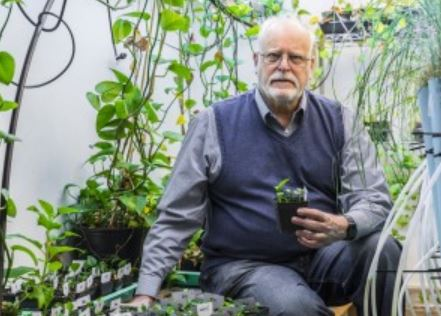 Prof. Strand holding a genetically modified houseplant