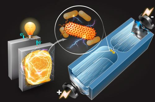 Microfluidic technique - electricity-producing bacteria article