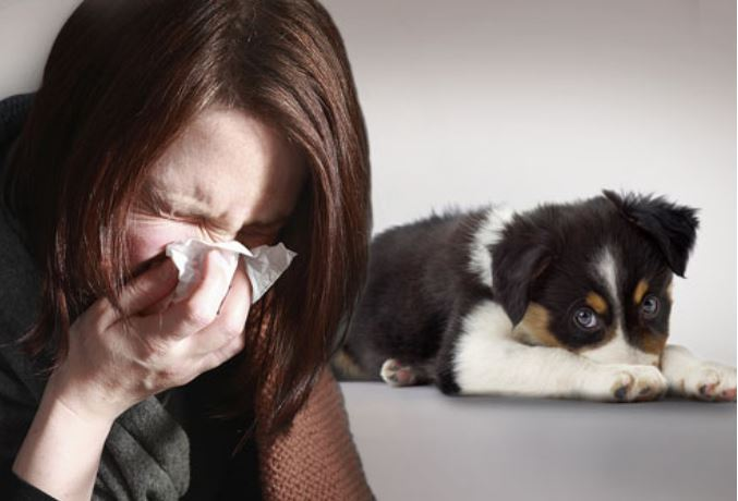 Allergic to the office dog image 44444