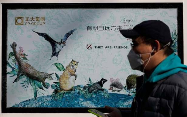 จีนให้เลิกเพาะสัตว์ป่า 4