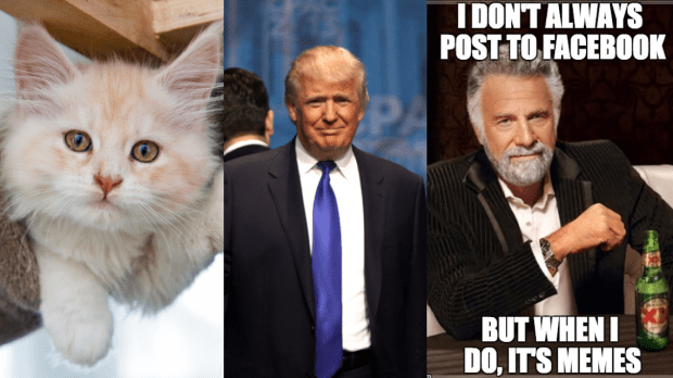 Kittens, Politics and Memes Social Media Myths