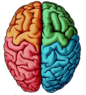 Imagen de cerebro en 4 colores