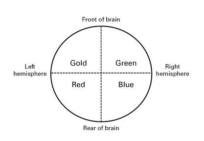 Mapa 4 colores del cerebro. Imagen.