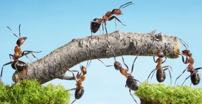 Ants Strive