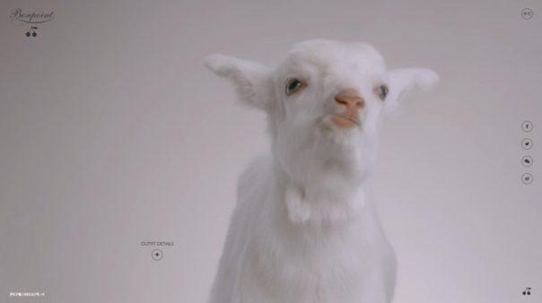 Bonpoint_goat