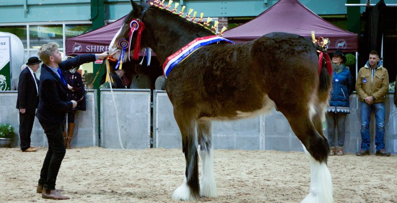 Mojo winning National Championship at the National Shire Horse Show