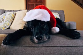 Santa delivers stress and Christmas sick leave for UK workers