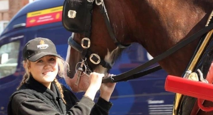 Brewery's shire horse team welcomes new apprentice