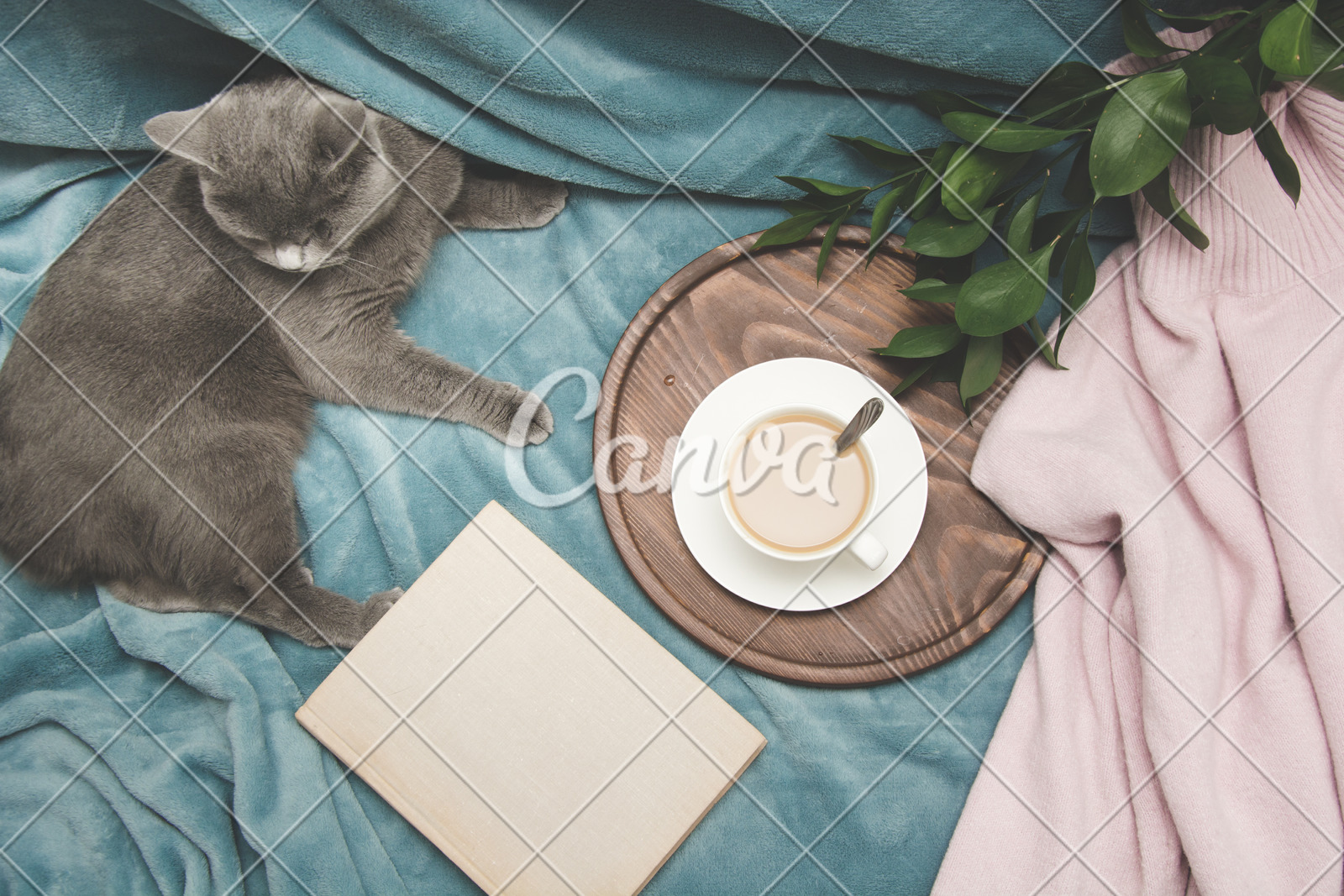 Hygge And Cozy Concept British Cute Cat Resting On Cozy