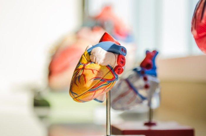 heart-maquette