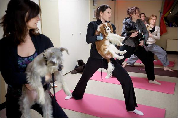 dogwarriors