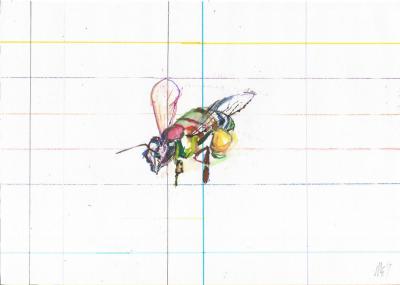 Honey Bee drawing
