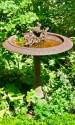 Forellezucht Vogelbad