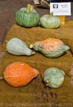 Blauer Ungar, Bratkürbis, mehlig - wie Bratkartoffeln zubereiten