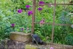Garten Marguerite18