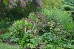 Garten Marguerite56