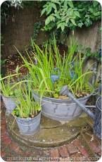 Garten Marguerite67