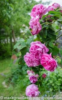 Garten Mai 20