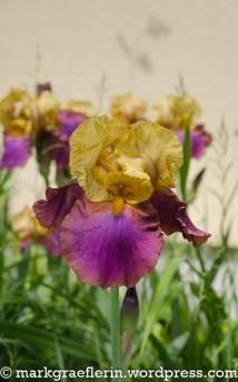 Garten Mai 6