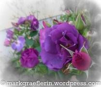 Rose violett
