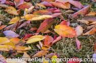 Kirschbaum-Blätter