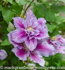 Garten Mai_Juni 16