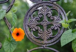 Garten Ende Juni_Juli 2016_15